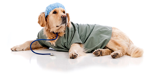 Laurea in medicina Veterinaria