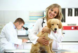 punteggio-minimo-veterinaria